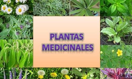 Incrementa Cuba área destinada a plantas medicinales