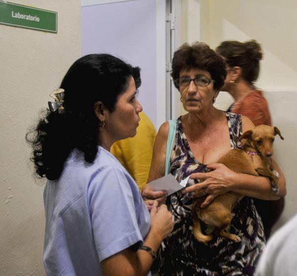 Finalmente abrir nuevamente clínica veterinaria de Carlos III