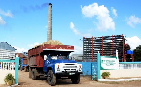 Cumple Cuba plan de producción de azúcar orgánica