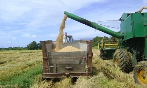 Créditos del fondo de desarrollo agropecuario beneficiarán producción de alimentos en Camagüey (+ Audio)