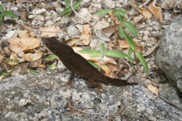 Trabajan en Nuevitas para la conservación de especies endémicas