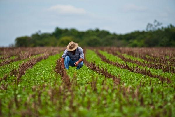 Adopta la Agriculta cubana medidas para la recuperación