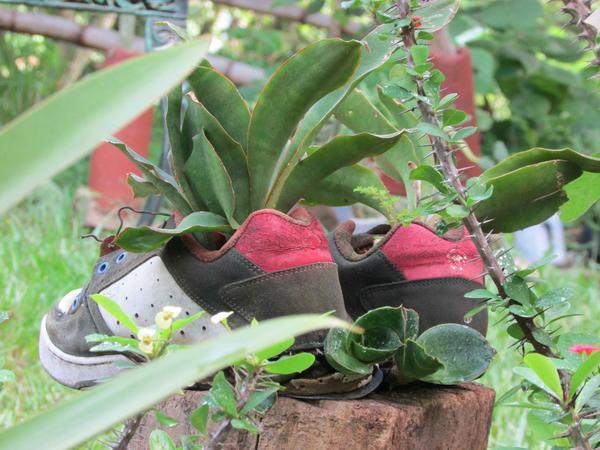 En la permacultura las plantas crecen en objetos insospechados como zapatos, tenis, desechos convertidos en ornamentos, en El Jobero, de Cumanayagua, en Cienfuegos, el 14 de septiembre de 2017 ACN FOTO/ YULIET SÁEZ