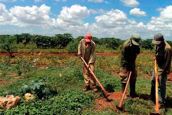 Over 2 million hectare of land granted in usufruct in Cuba