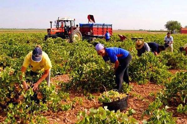 Resultado de imagen para site:www.acn.cu producción agricola
