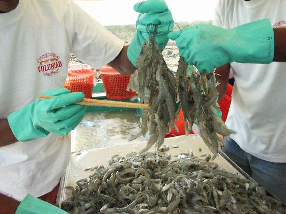 Proyectos de la Universidad de Camagüey apoyan la producción de alimentos