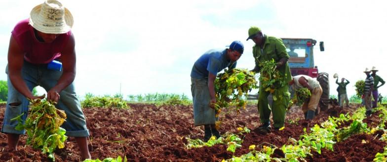 Jornada del Trabajador Agropecuario por más productividad