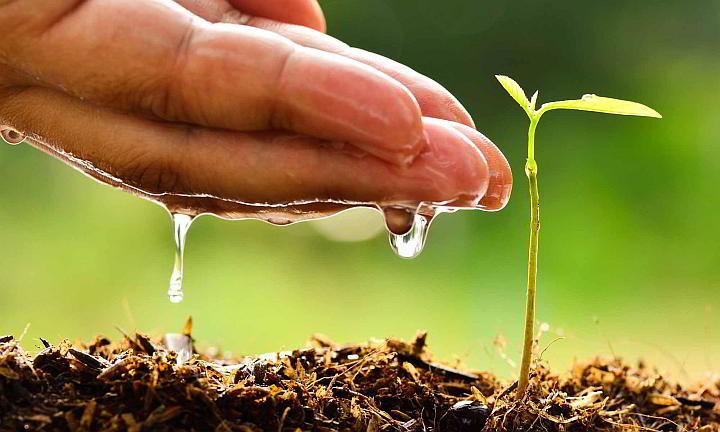 Resultado de imagen para site:www.acn.cu tarea vida