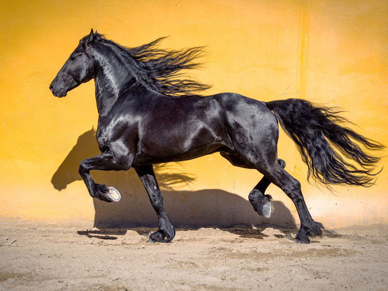 Los caballos, entre la utilidad y la leyenda ACN