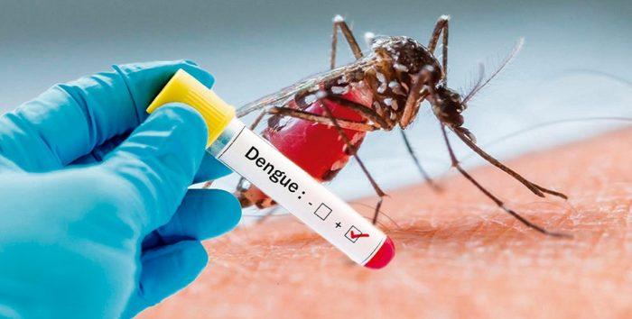 0820-dengue.jpg