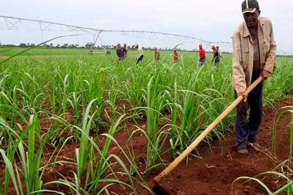 Implementan alternativas para impulsar siembras de primavera en Cuba