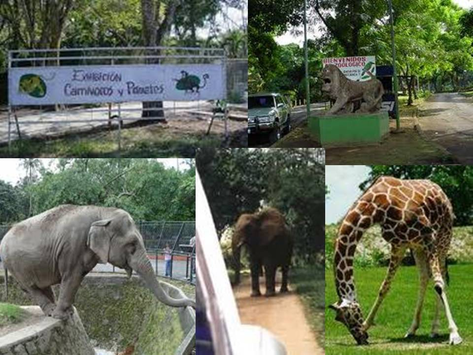 Cuban National Zoo will receive new animals