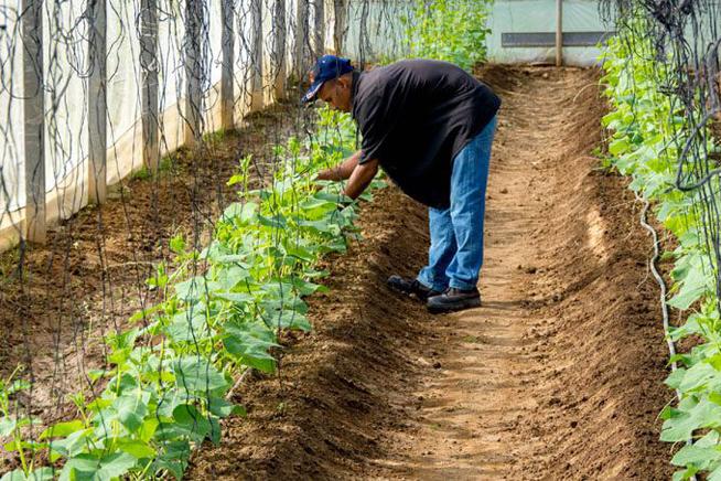 Recuperan módulos de casas de cultivo protegido en Granma