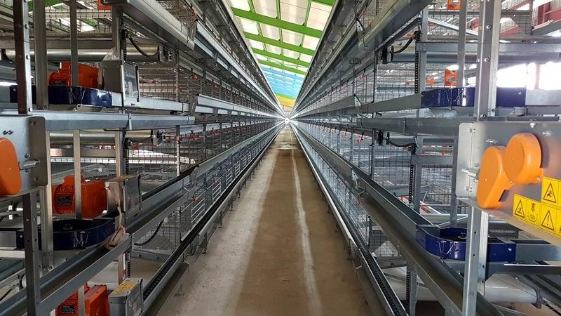 Próxima a inaugurarse en Camagüey granja avícola automatizada con tecnología alemana