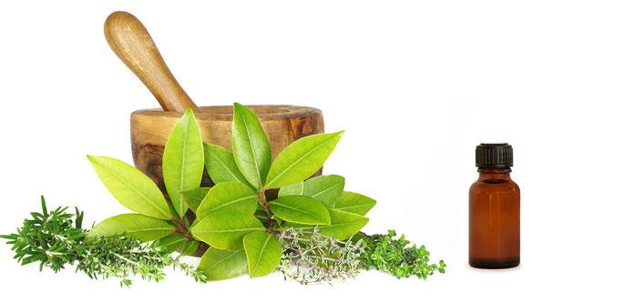 Foire de produits  naturels célèbre le jour du pharmacien cubain à Holguin