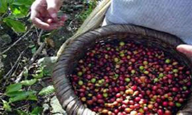cafe artemisa