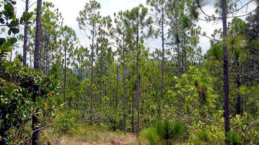 Cuerpo de Guardabosques de Cuba insta a contrarrestar los incendios forestales