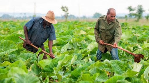 International cooperation project supports food production in Cuba