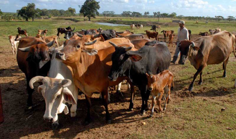Fomentan entidades camagüeyanas acciones de capacitación para el progreso ganadero (+ Foto)