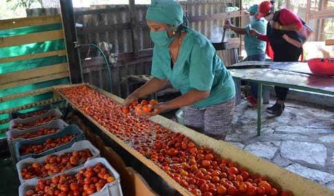 Desarrolla el país incentivos para estimular la producción y comercialización de alimentos