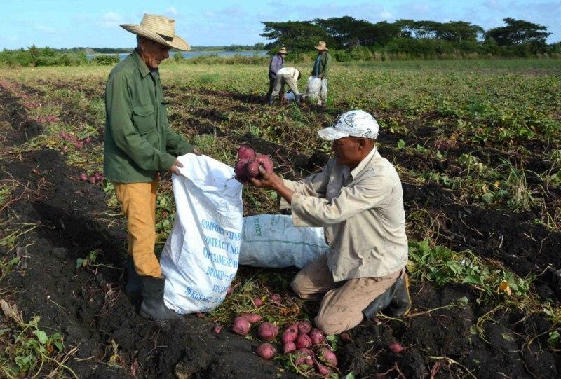 Trabajan en Camagüey por mejorar rendimientos agrícolas
