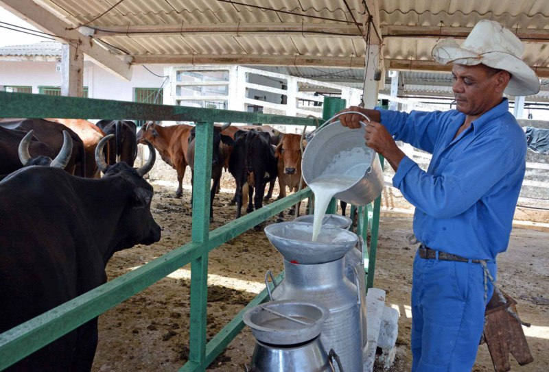 Camagüey closes the year with six milk production companies reaching one million liters