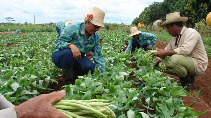 Avanza en Camagüey entrega de tierras en usufructo para potenciar producción de alimentos