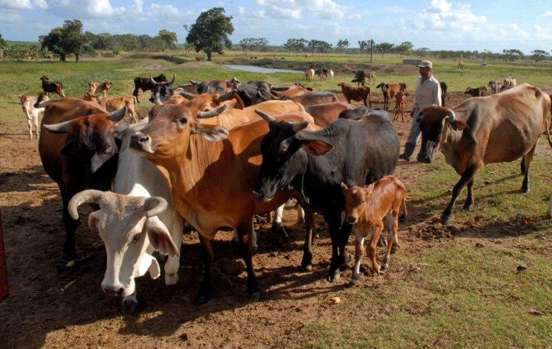 Desarrollará filial camagüeyana de la ACPA nuevo proyecto de desarrollo ganadero