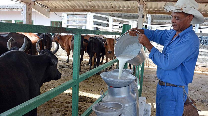 Ganaderos camagüeyanos trazan estrategias para incrementar acopio de leche