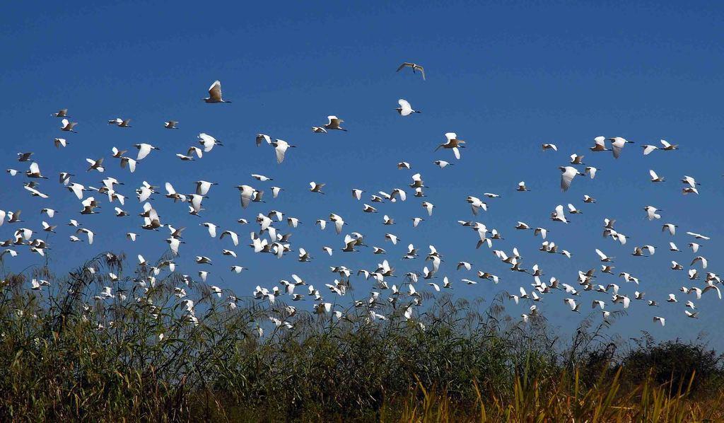 Logra Camagüey resultados relevantes en el desarrollo de la gestión ambiental
