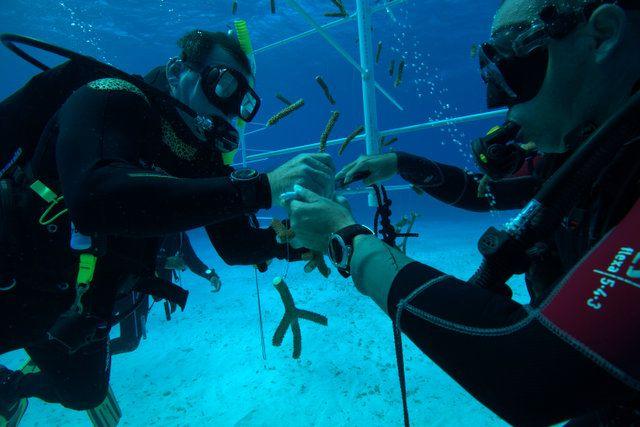 0906-arrecifes-coralinos2.jpg