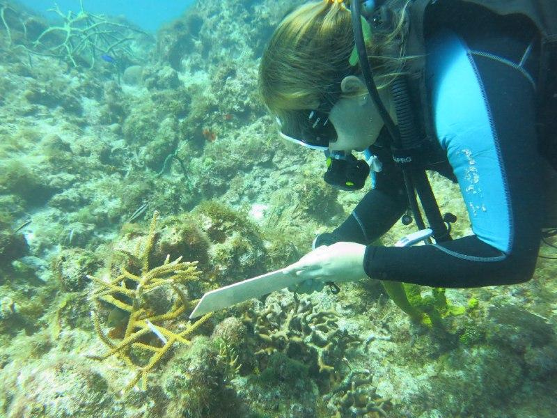 0906-arrecifes-coralinos4.jpg