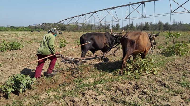 Nuevas medidas relacionadas con consumo del agua y electricidad en el sector de la agricultura en Cuba