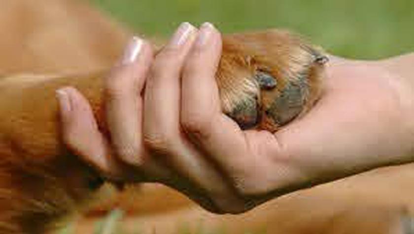 Emite Cuba decreto ley sobre contravenciones de la medicina veterinaria