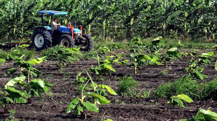 Trabajan en Camagüey para completar campaña de siembra de frío (+ Foto)