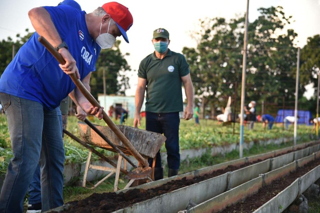 Participa Presidente cubano en trabajo voluntario en La Habana (+ Fotos y Tuit)