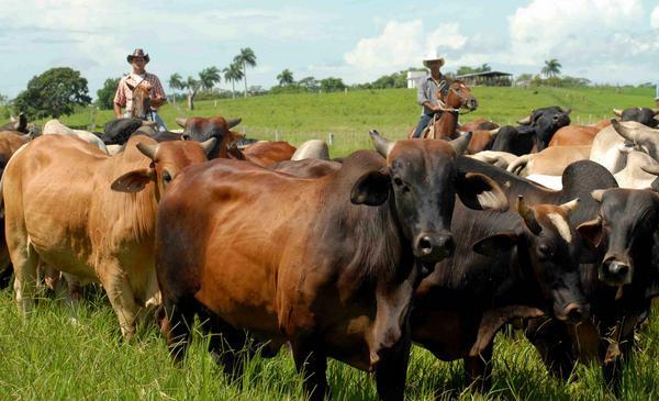 Rehabilitan en Camagüey cotos genéticos para preservar recursos autóctonos y amenazados