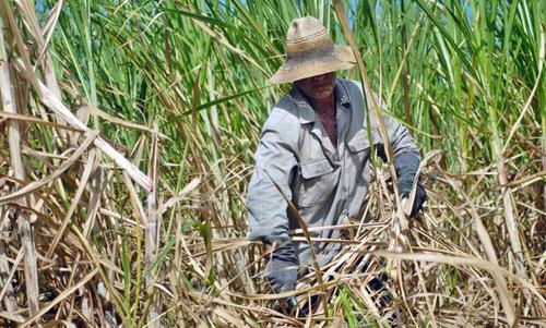Resultado de imagen para azúcar site:www.acn.cu