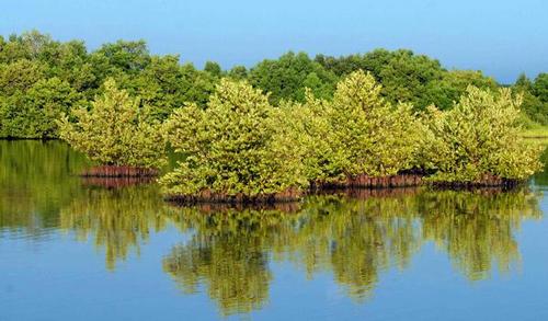 Resultado de imagen para manglares, cuba, acn