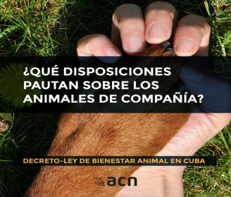 Proteccion Animal 2